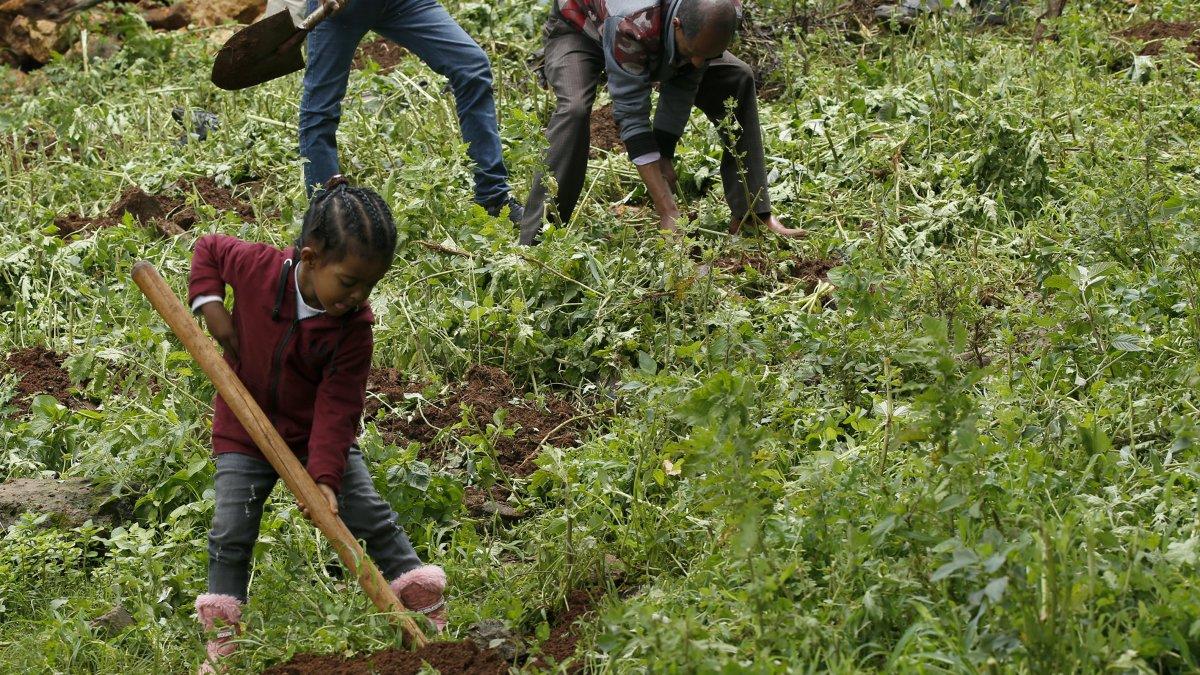 Etiyopya halkı, fidan dikmede dünya rekoru kırmak için seferber oldu.