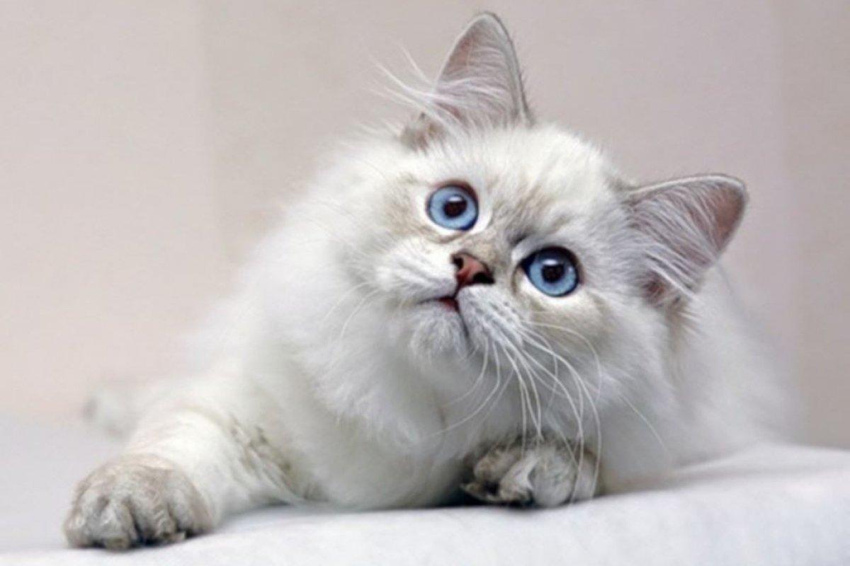 Kediler Hakkında Bilmemiz Gereken 9 Şey