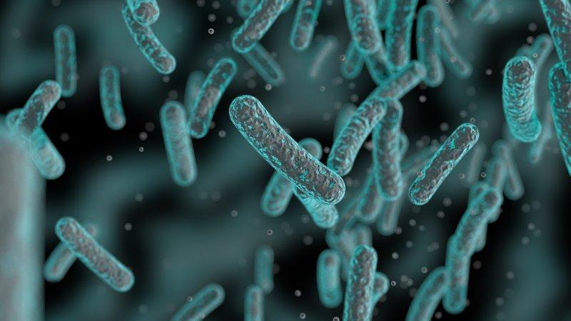 Bağırsak hastalıkları yerli ilaç ile tedavi edilecek