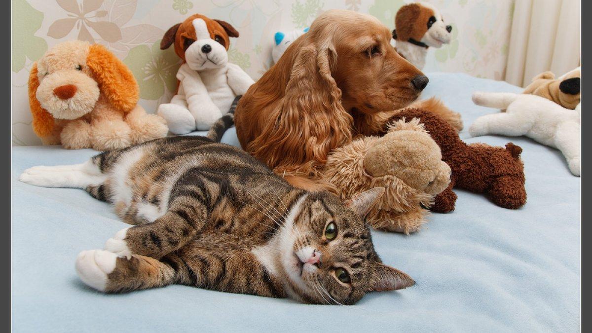 Hayvanların Bakımında 5 önemli Detay