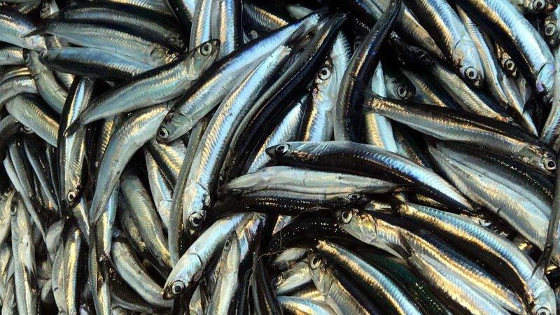 Balığı az pişmiş tüketiyorsanız buna dikkat!