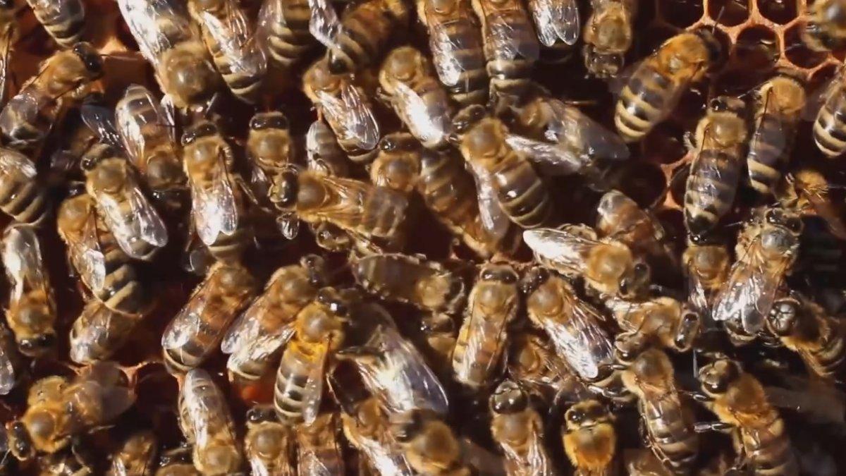 """TEMA: """"Arılar varsa, yarınlar var"""""""