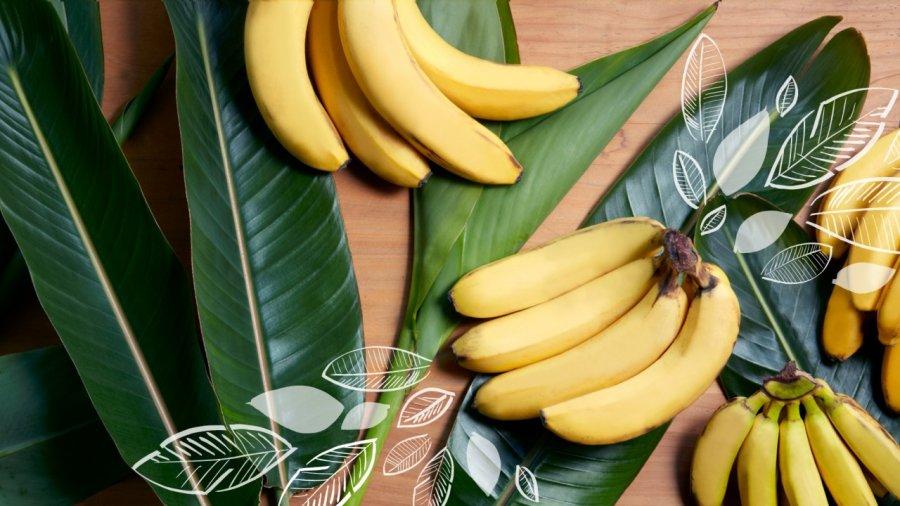 bananaheader-mar25.jpg
