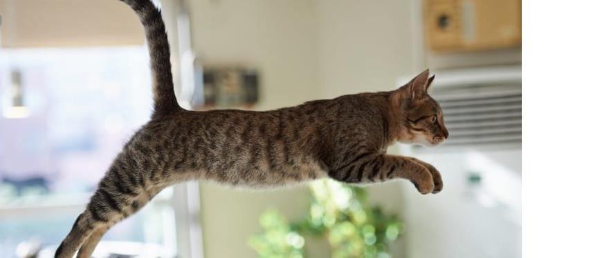 kediler-yuksekten-dusme-konusunda-ne-kadar-basarili-olabilir-2.jpg