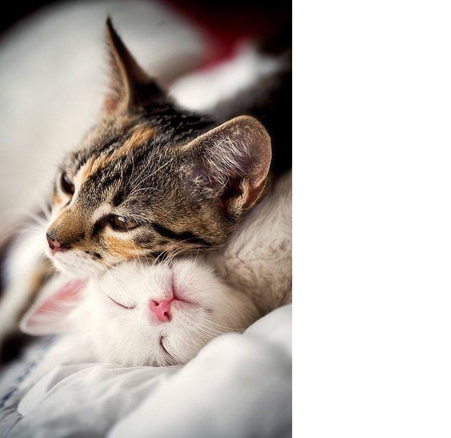 tum-romantik-filmleri-geride-birakan-21-asik-kedi-cifti-14.jpg